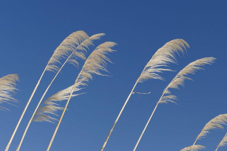 Grass Seeds Seed Head Blue Sky Natures Diversities