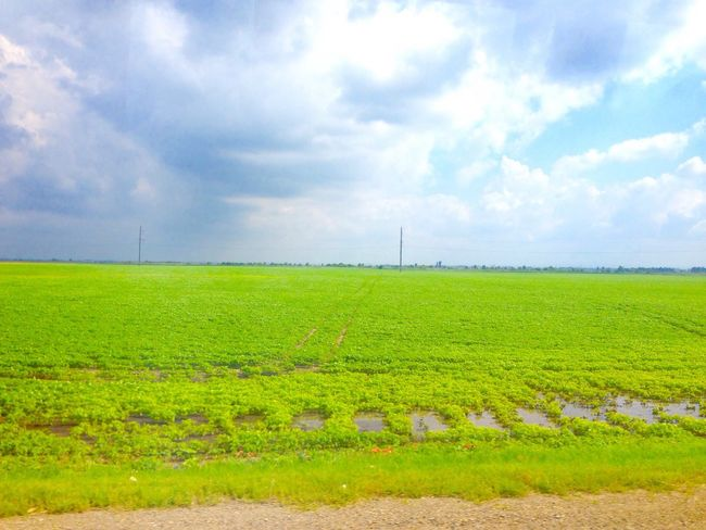 Landscape Green Color Beauty In Nature Horizon Over Land