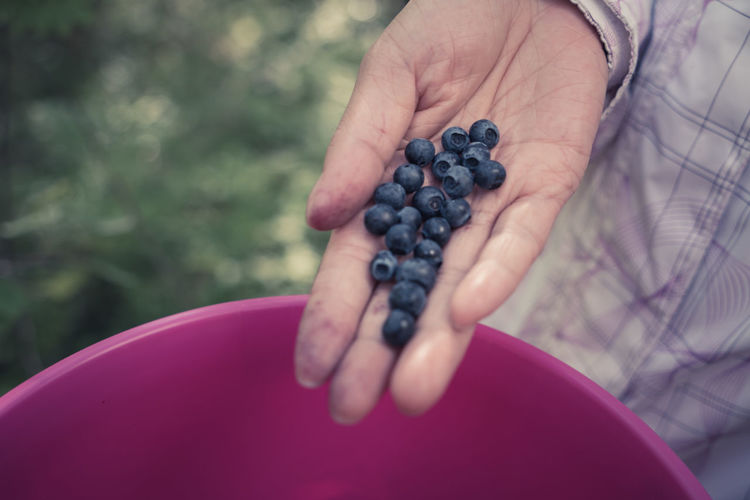 Cropped hand holding blueberries over bucket