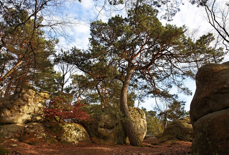 Image from the entrance in the Gorges of Franchard in the forest of Fontainebleau in the early spring.This French forest is a national natural park wellknown for its boulders with various sahpes and dimensions. It is the biggest and most developed bouldering (a specific style of rock climbing) area in the world. Tree Nature Rock No People Beauty In Nature Non-urban Scene Tranquil Scene Scenics - Nature Sandstone Outdoors Forest Fontainebleau Fontainebleau Forest Landscape Boulders Nature Autumn Autumn colors Background Scenics