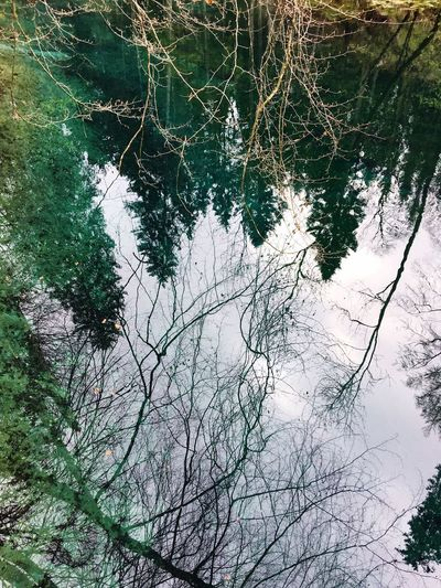 Nature Beauty In Nature Day No People High Angle View Outdoors Tree Water Tranquil Scene Tranquility Winter Branch Scenics Growth Cold Temperature Bavaria Teufelsküche Reflection Sky Source
