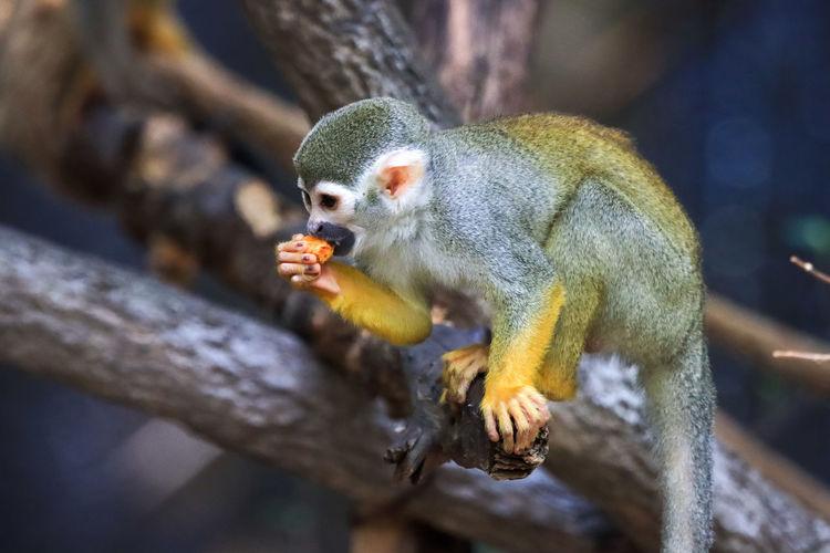 Close-up of monkey eating tree