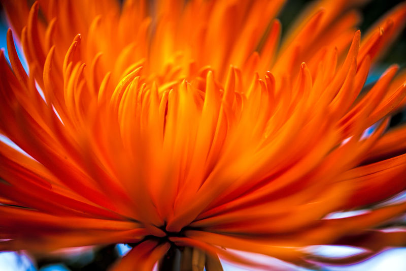 EXTREME CLOSE UP OF FLOWER