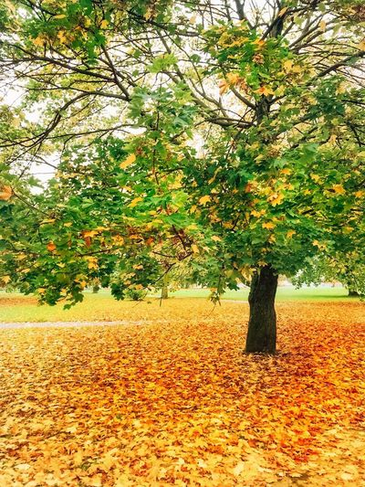 Plant Tree Growth Nature Autumn Beauty In Nature Day Sunlight Orange Color Change Park No People Outdoors Tranquil Scene Land Scenics - Nature Plant Part Tranquility Field Leaf