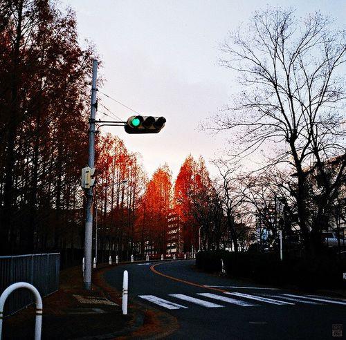 Kowa/SIX 85mm/F2.8 Lomography Color Negative 800 Mylife Sunset_collection Osaka,Japan Street Photography Analog Film Sunset Film Camera Sky