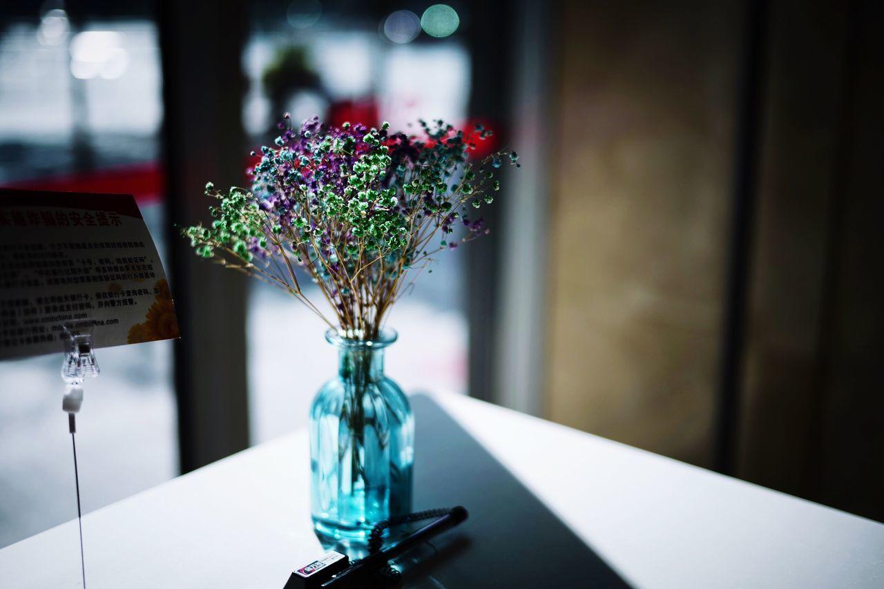 flowering plant, vase, table, flower, focus on foreground