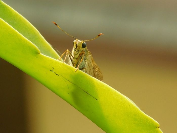 Close-up of moth on leaf