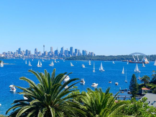 in love with this place. Nature Sydney, Australia Operahouse Sydney Opera House Sydney Watsons Bay Sailing Boats Skyline Sydney Tower Eye Harbour Bridge Clear Sky Architecture Blue Sea Water Building Exterior Cityscape City Skyscraper Outdoors Travel Destinations Harbor Palm Tree Built Structure Mobility In Mega Cities EyeEmNewHere