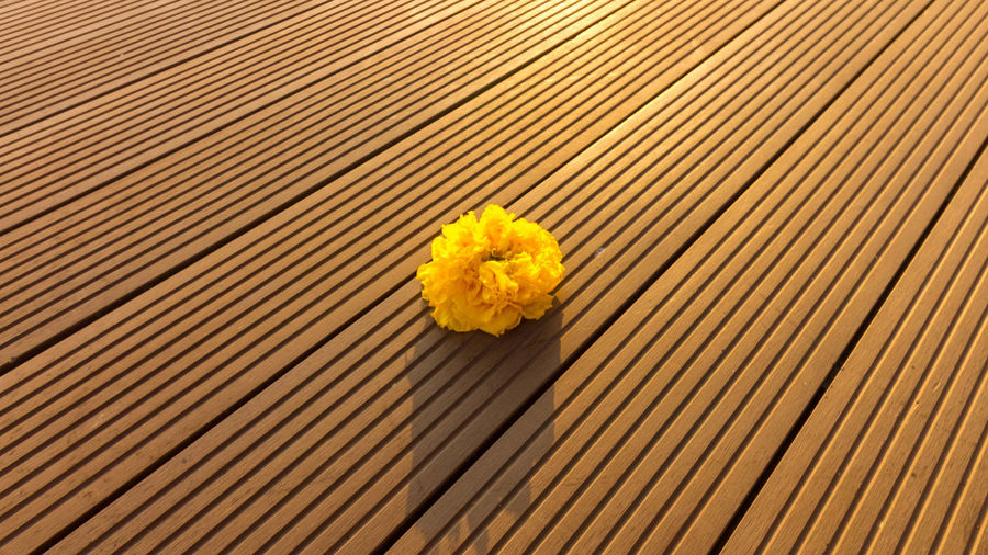 Close-up of yellow flower on wood