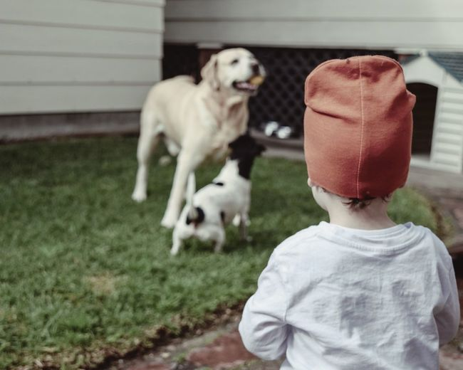 Rear view of boy looking at dogs playing in lawn