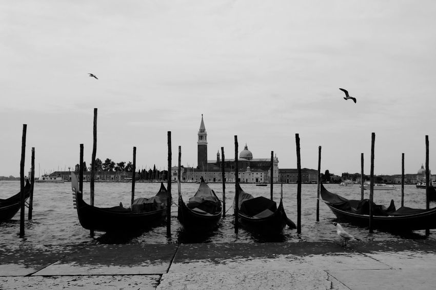 Beauty In Nature Bird Boat Cloud Cloud - Sky Day Gondola Gondole In Venice In A Row Nature No People Outdoors Sailboat Sky Tourism Tranquil Scene Tranquility Water Wooden Post
