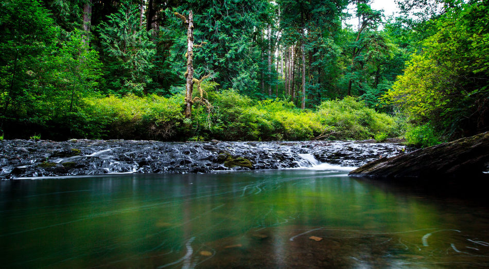 Cascadian Creek
