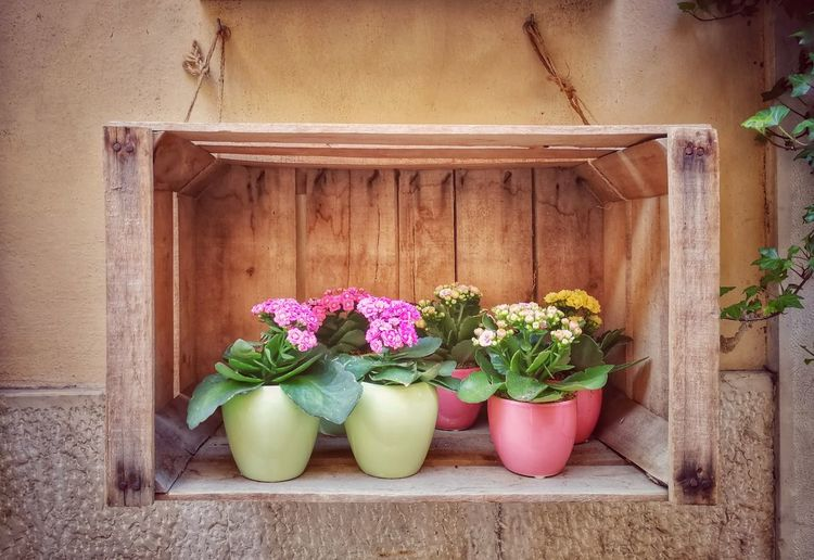 Collection Design Flowers Arrangement Flower Arrangement Wall Freshness Beauty Vase Vase Of Flowers Box Wood - Material Wood Box Flower Pastel Colored Architecture Close-up Blooming Fragility Potted Plant Flower Pot Houseplant Plant Life Window Box Flower Head Whitewashed In Bloom