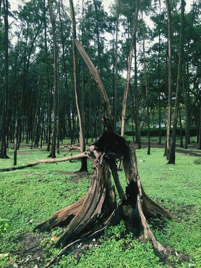 Tree Trunk Beauty In Nature Landscape Non-urban Scene EyeEm Nature Lover Hello World ✌ Check This Out Burnt Wood No People Extravagance WoodLand Landscape Nature Beauty In Nature Extraordinary Nature Extravagant Tourism Outdoors