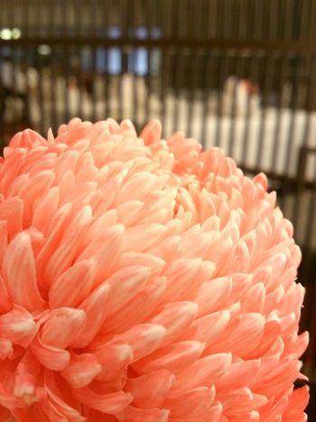 喜氣 Flowers
