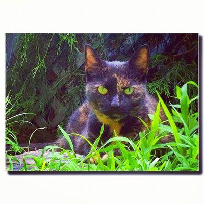 Ginger (a.k.a. MissyLou) #cat #cats #pet #petstagram #nature #kitten #kittens #catstagram #cutie #pets #kitty #catlovers #catsofinstagram #animal #sweet #life #catlover #ilovemycat #ilovemmypet #instapets #petsagram #meow #picpets #instacat Cutie Kittens Cat Catstagram Nature Ilovemycat Catsofinstagram Cats Petstagram Pets Catlover Kitty Petsagram Animal Instacat Meow 60likes Life Picpets Sweet Instapets Pet Catlovers Kitten Ilovemmypet