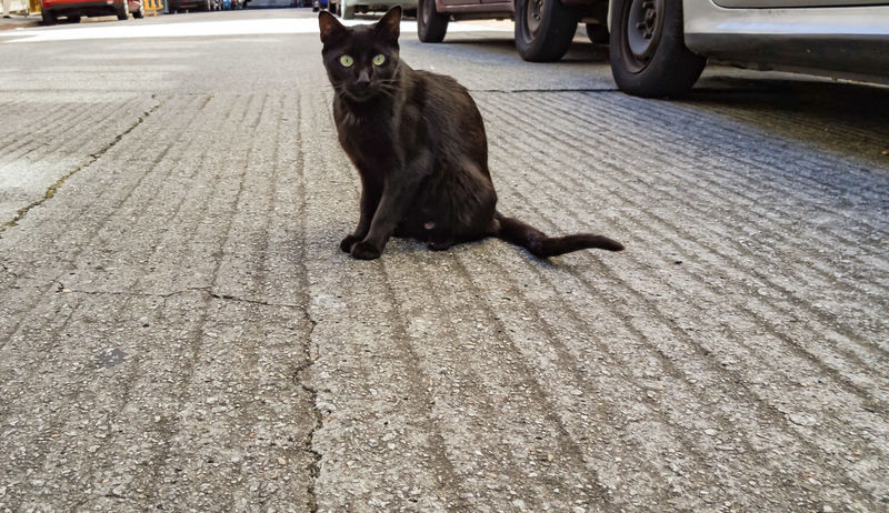 Black cat Asfalto Calle Cat Concrete Gato Negro No People One Animal Outdoors Pets Sitting Street Streetphotography