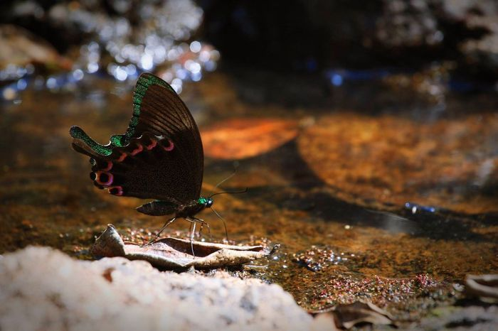 Butterfly Forest Nature Nature_collection Nature Photography Naturelovers Naturephotography Kaoyai Thailand
