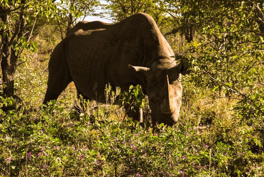EyeEmNewHere Animal Themes Animal Wildlife Animals In The Wild Beauty In Nature Mammal Nature One Animal
