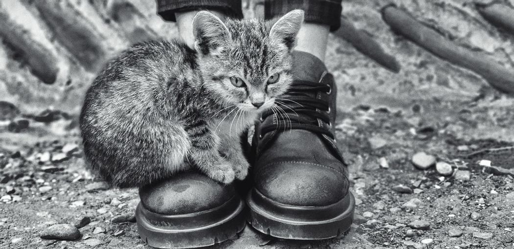 Side view of kitten sitting on owner shoes