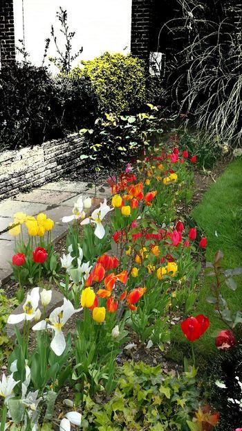 Garden Garden Photography Gardening Garden Love Garden Flowers Garden_styles Taking Photos Gardenflowers Garden_world Garden