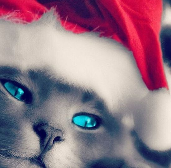 Awesome Cute Instachristmas Cutecat Christmaskitty Adoreable Loveit Lovely Couldntbehappier Couldntbebetter Couldntvesaiditbetter InstagramWorthy Instagreatestshots Instagreatestshotsiphonesia