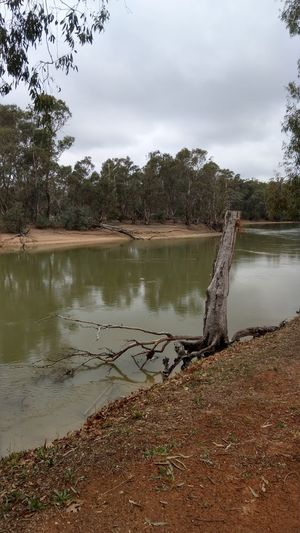 Water Tree Lake Reflection Sky Landscape Cloud - Sky
