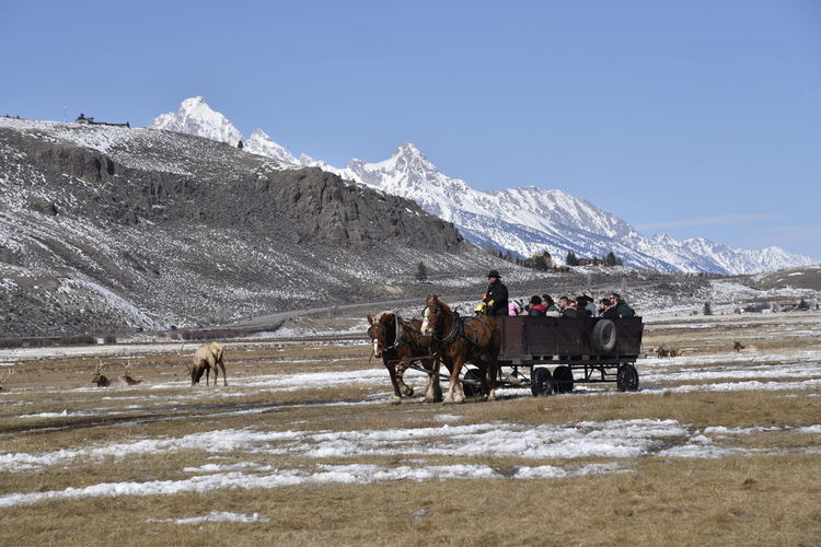 National elk refuge sleigh ride in jackson hole