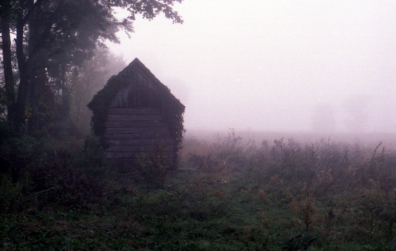 A analog photo