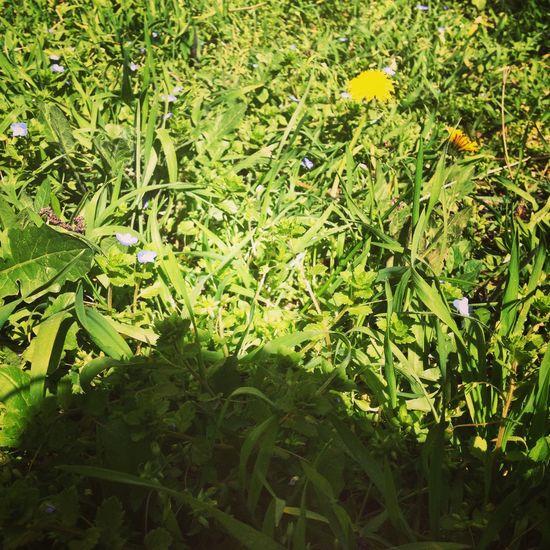 Spring Welcomespring Spring Flowers Garden Flowers Flowers,Plants & Garden 🍃🌻💜💚 Loveit