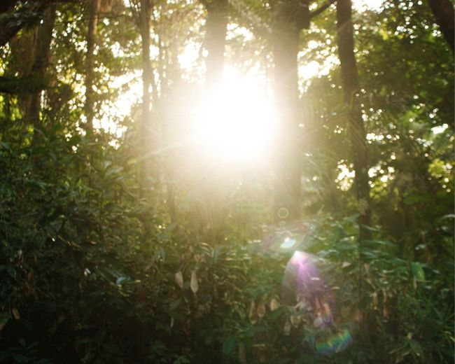 Light Sunlight Beauty In Nature Day Forest Freshness Landscape Landscape_photography Lens Flare Nature No People Plant Sun Sunbeam Sunlight Sunset Tranquil Scene Tranquility Tree WoodLand First Eyeem Photo