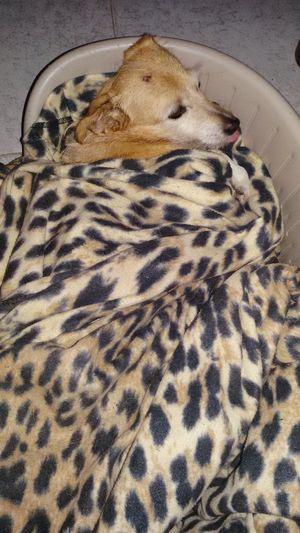 Tranquility Cellphone Photography Cell Phone Photography Dog Sleeping  Dogsofinstagram Dogs Of EyeEm Dogdog Dog❤ Dogslife Dogdays Cane