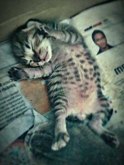 U think im cute 😺😺 Kitty Kitten Cat Catoftheday Pet Sweet Moments