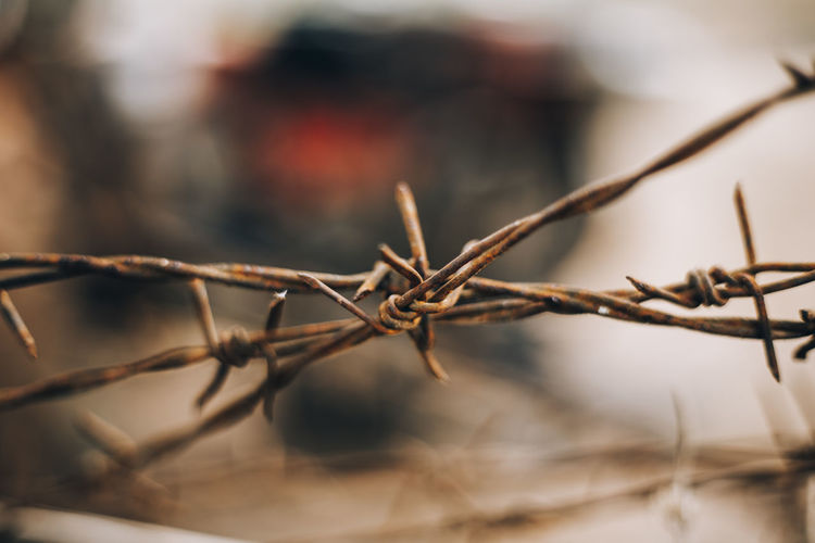 Close-up Selective Focus Nature Outdoors Focus On Foreground Plant Barbed Wire Safety Protection Wire Metal Rust Rusty Metal Barbed Wire Barbed Wire Close Up Partition