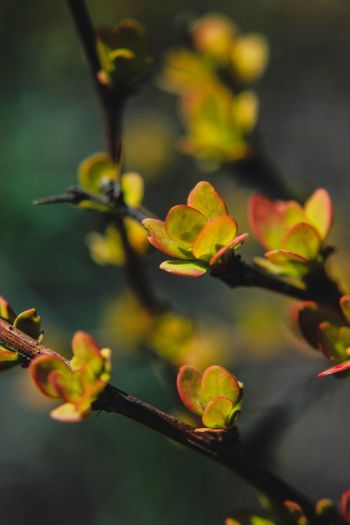 Close-up of fresh yellow flowers on tree