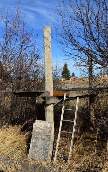 Platform Daytime Vapor Lamp Ladder Trees Blue Sky Off Ground Outside Post Wood