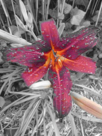 Eyeem Colorkey Colorkey Color Key Colorkey Flowers