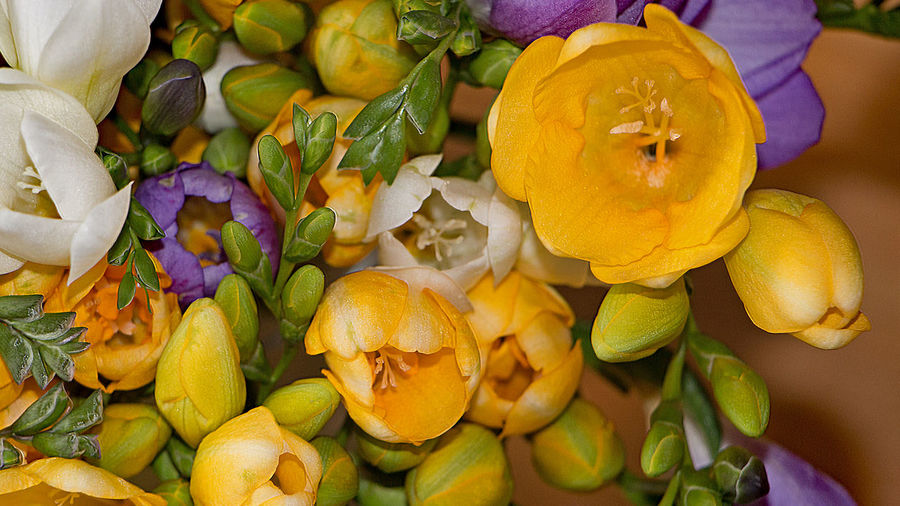 Flower bouquet, Blumenstrauss Birthday Close-up Day Flower Flower Bouquet  Flowers Freshness Fresien Fruit Healthy Eating Matherday Mother's Day Muttertag Nature No People Outdoors Pumpkin Yellow
