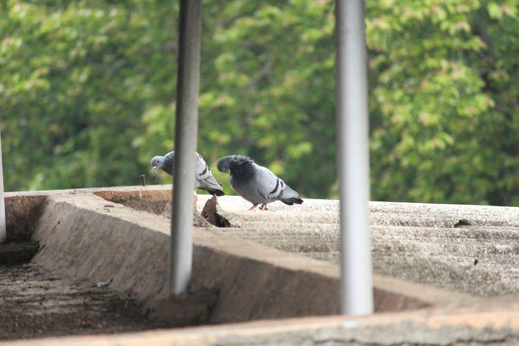 bird Love Birds Pegion EyeEm Selects Raccoon Tree Baboon Animal Themes