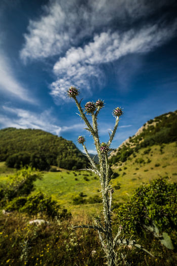 Abruzzo National Park Beauty In Nature Blue Close-up Cloud - Sky Day Green Color Growth Landscape Nature No People Outdoors Plant Raw Flower Scenics Sky Tranquil Scene Tranquility Tree Perspectives On Nature