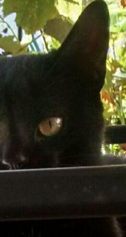Still Life Photography Cats Of EyeEm The Minimals (less Edit Juxt Photography) Cat Lovers Cat Eyes Noedit Nofilter Notneeded [a:932871] Photooftheday Big Eyes Macro Beauty