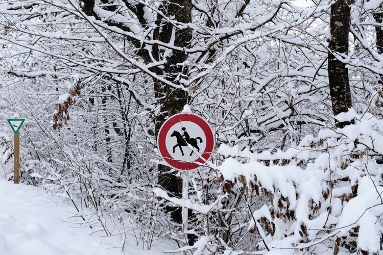 Snow Winter Cold Temperature Sign Tree Branch Communication Road Sign Information Outdoors