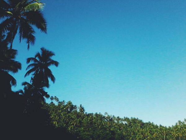 👣 I went to a place where wifi is weak. Palm Tree Tree Blue Tropical Climate Nature Sky Green Color Growth Day Clear Sky Outdoors No People Beauty In Nature Scenics Tree Area EyeEm Nature Lover Clear Sky Eyeem Philippines Adventure Beauty In Nature Earth Day 2k17