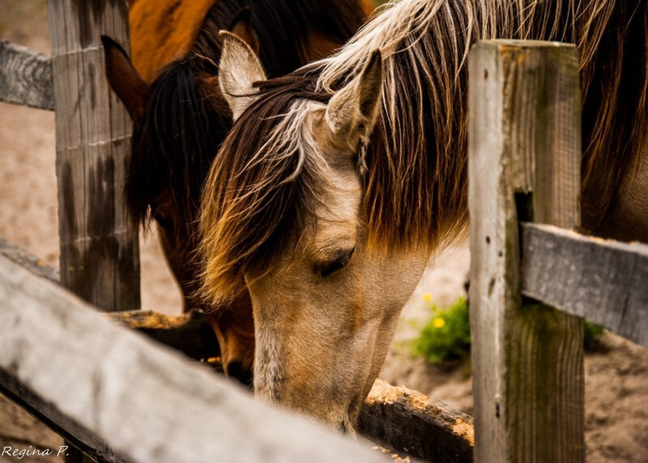 horse, domestic animals, animal themes, mammal, wood - material, livestock, one animal, stable, day, no people, outdoors, standing, close-up