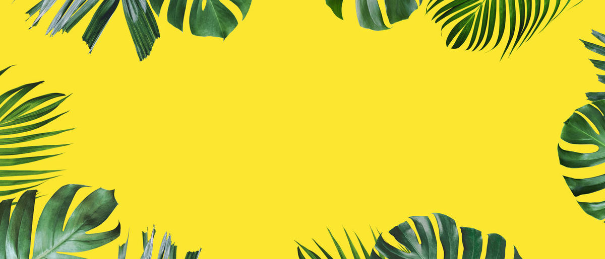 Close-up of palm leaves against yellow background