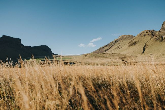 Memories from 🇮🇸 Iceland_collection Iceland Memories Iceland EyeEm Nature Lover EyeEm Selects Sky Landscape Plant Land Environment Scenics - Nature Tranquil Scene Nature Tranquility Beauty In Nature Mountain Field No People Clear Sky Growth Non-urban Scene Copy Space