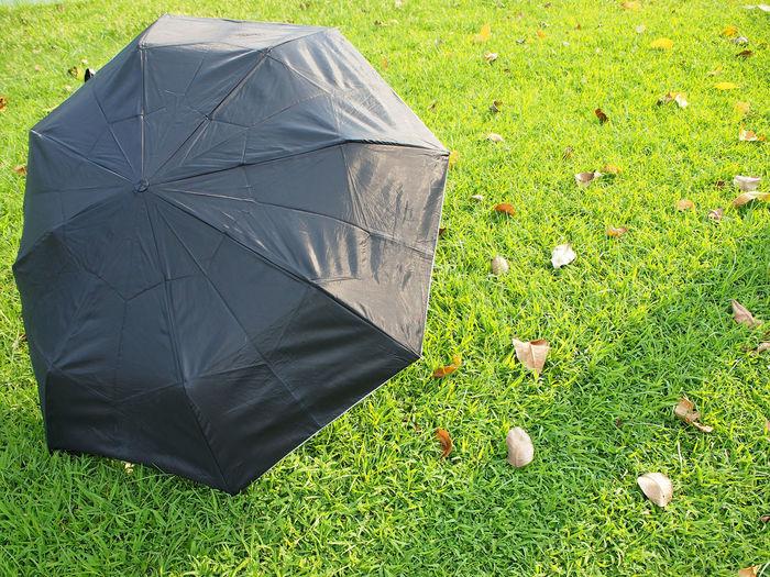 Black umbrella on green lawn Umbrella Green Lawn Photography Day Season  Nature