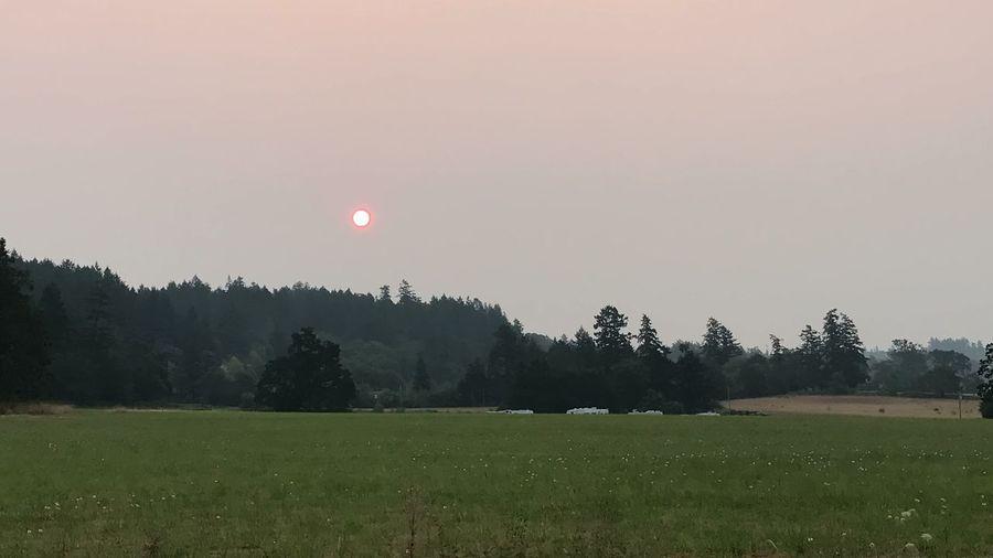Field Beauty In