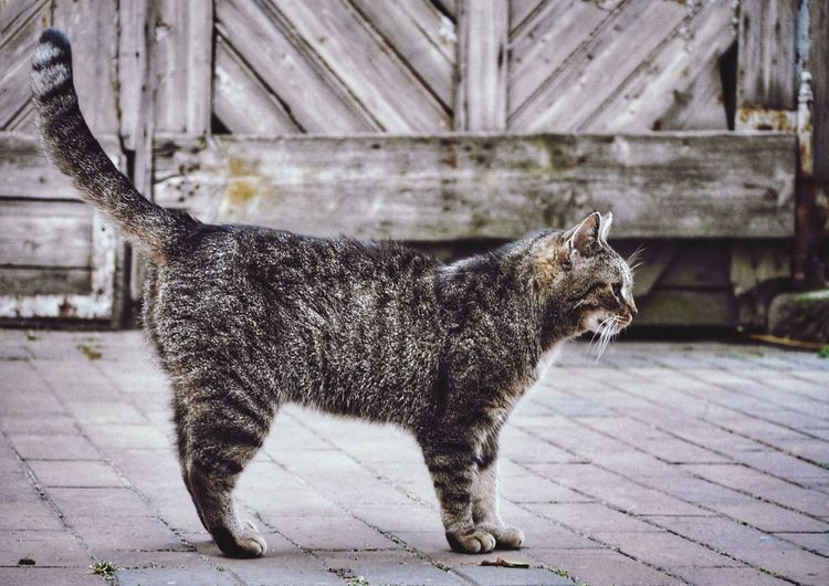 Cat standing on footpath