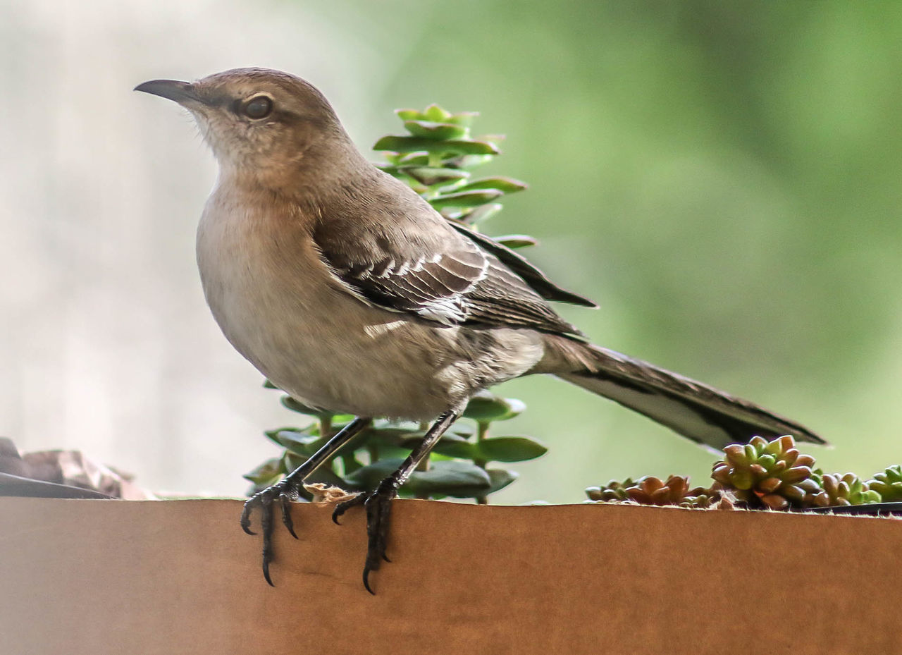 bird, perching, animal themes, one animal, animals in the wild, focus on foreground, no people, animal wildlife, day, close-up, sparrow, nature, outdoors, robin, flower